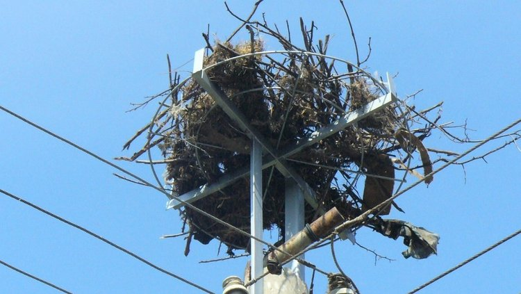 242 нови щъркелови гнезда по електрическите стълбове тази пролет