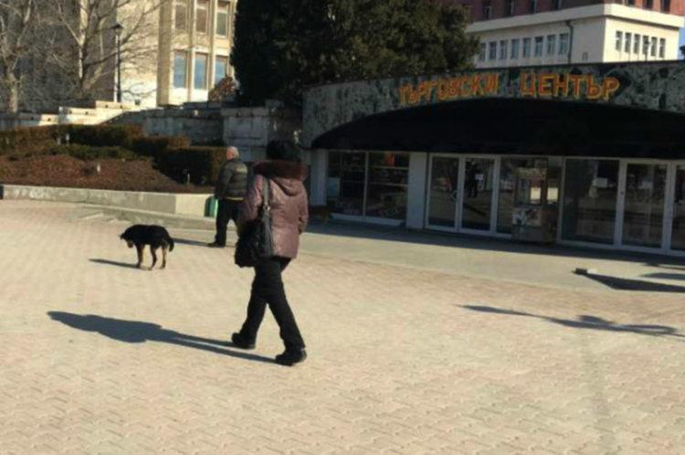Asenovgrad.NET Бездомните кучета са на всяка крачка в Асеновград, дори пред самата Община.