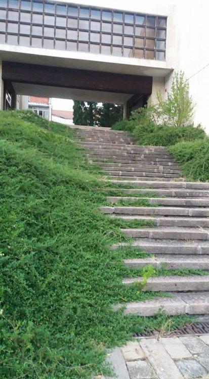 Смолянчани алармират: Междублоковите пространства - джунгли, алеите към Галерията, Библиотека и Музей потънаха в храсталаци