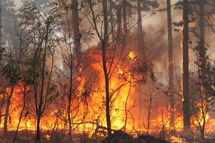 Екстремална опасност от пожари в Хасковско и още 5 области
