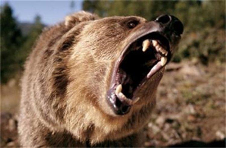 Само през август: 13 сигнала за нападения от мечки в смолянско