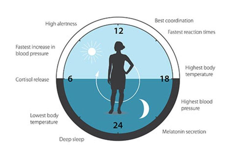Нобелова награда за механизма на биологичния часовник