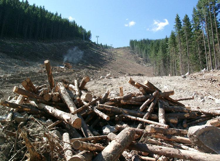 Бракониерска сеч на 18 дървета засечена край Гела