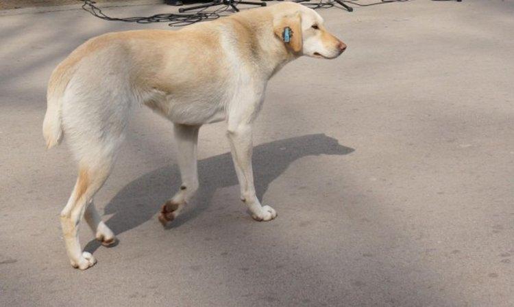 Протест с кучешки трупове в Перник
