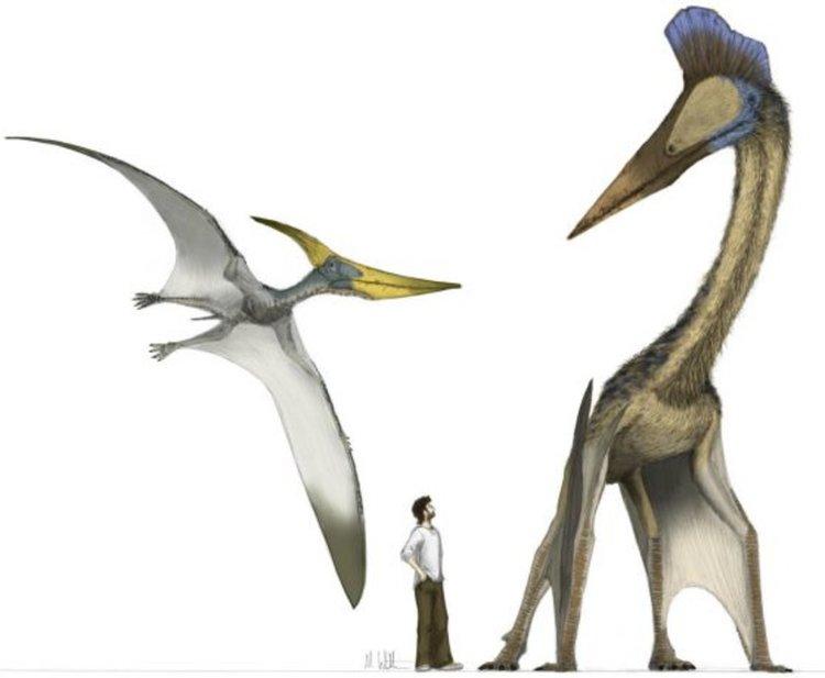 Древен летящ хищник с размерите на самолет е открит в пустинята Гоби