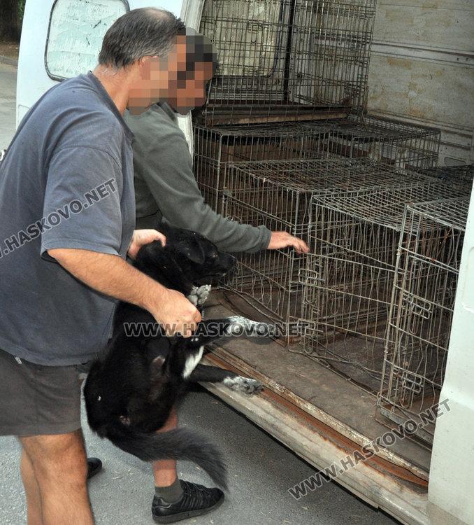 Поредна акция за бездомни кучета започва днес в Хасково