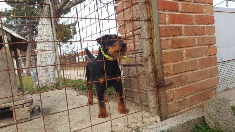 Издирва се изгубено ловно куче