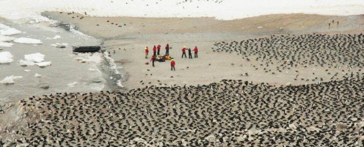 Откриха неподозирана суперколония на пингвини на отдалечен остров