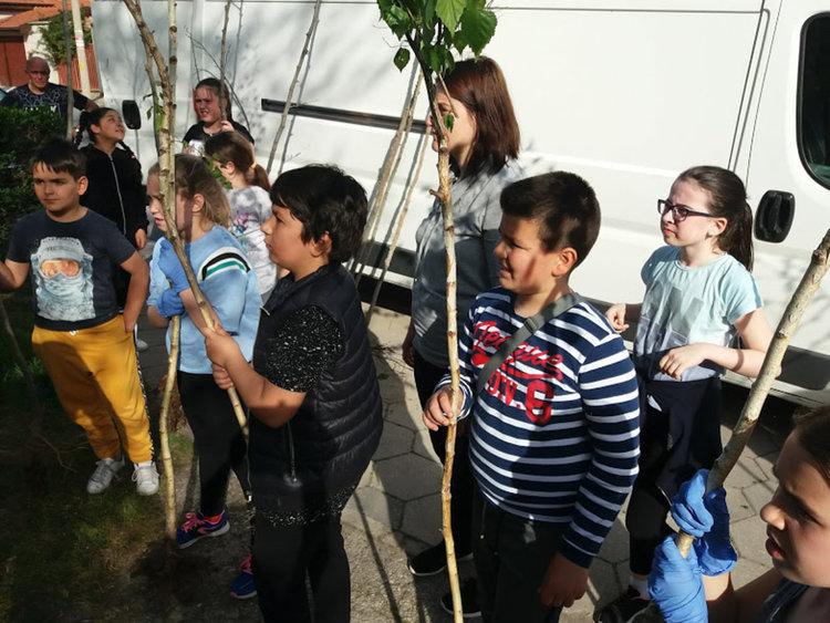 Четвъртокласници засадиха дръвчета в парка