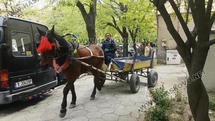 Конска каруца пердаши по тротоара в центъра на Хасково (видео)