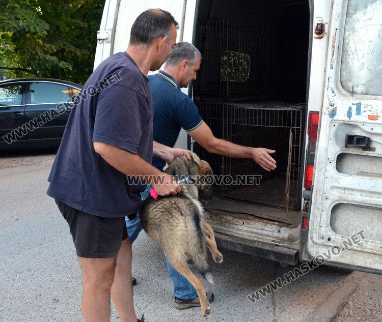 Акция за бездомни кучета започва в Хасково във вторник