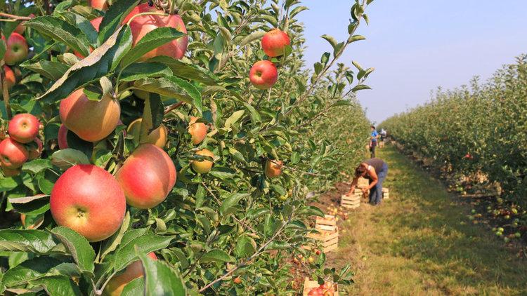 Разменяме  сезонни работници с  Молдова за 9 месеца в годината