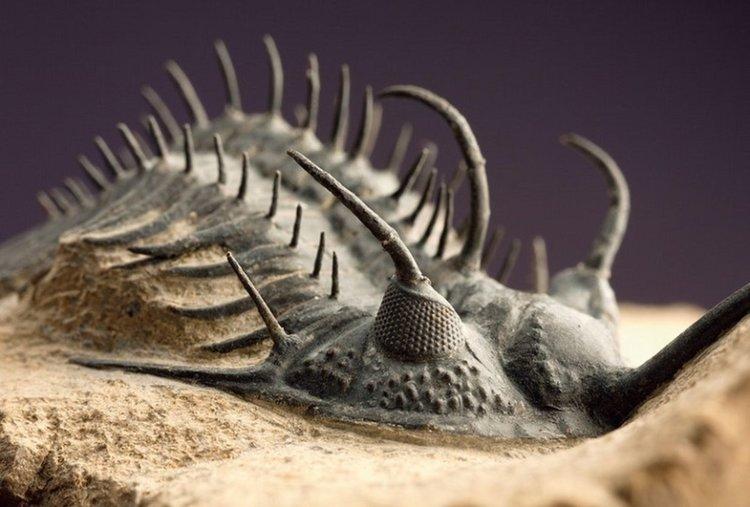 Петте масови изчезвания на видове в историята на Земята