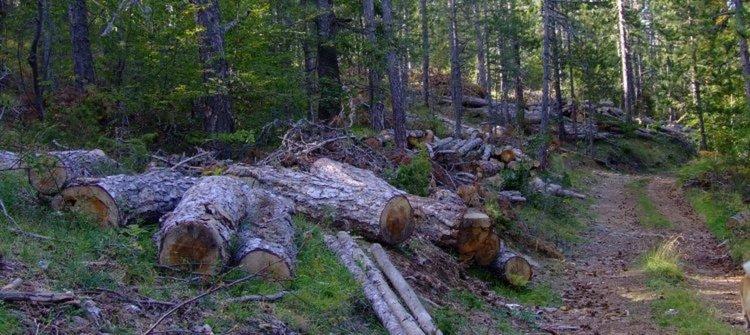 Светкавична оставка на шефа на агенция по горите