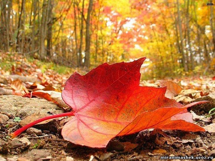 Времето днес без промяна, топло за ноември