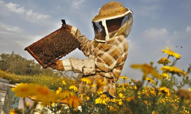 Пчелното млечице лекува Алцхаймер?