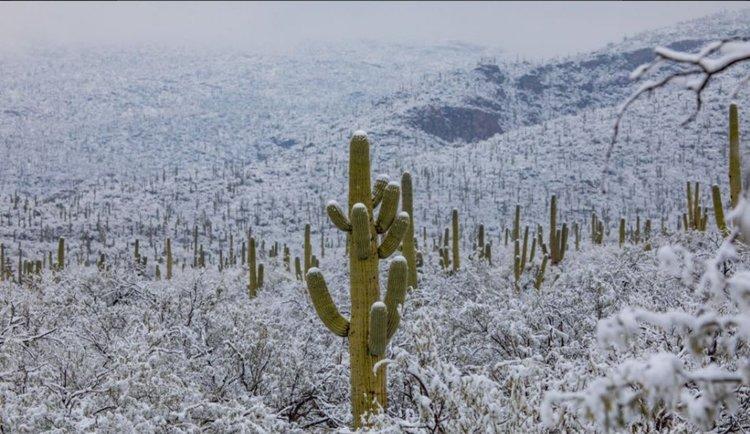 Кадри от пустините на Аризона до Ню Мексико показват фантастични картини на покрити със сняг гигантски кактуси. Сн.: Arizona Illustrated