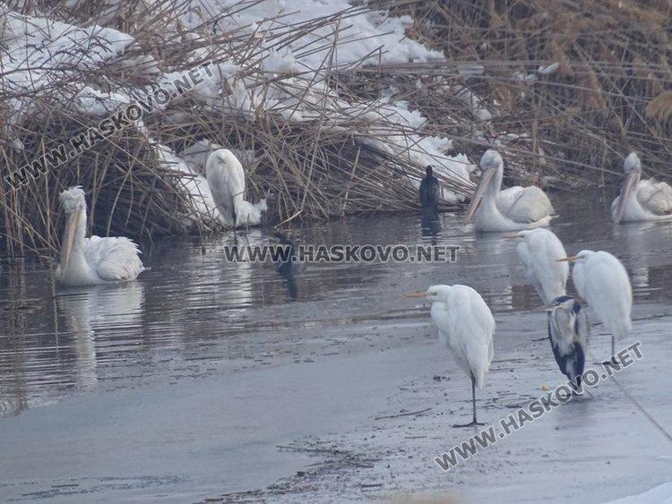 Орнитолози и доброволци броят птиците през зимата